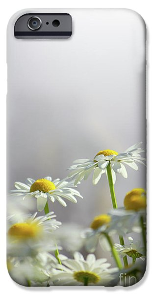 Agriculture iPhone Cases - White Daisies iPhone Case by Carlos Caetano