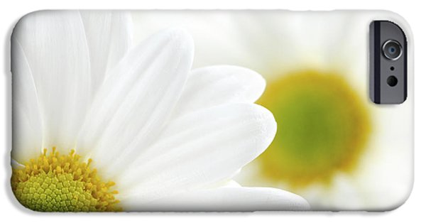 Innocence iPhone Cases - White daisies iPhone Case by Elena Elisseeva