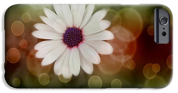 White Daisies iPhone Cases - White Daisy in a Sunset iPhone Case by Marianna Mills