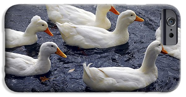 Geese iPhone Cases - White ducks iPhone Case by Elena Elisseeva