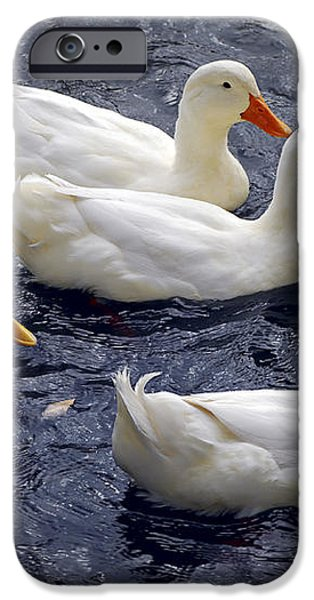 White ducks iPhone Case by Elena Elisseeva