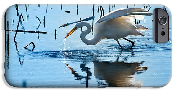 Wetland iPhone Cases - White Egret At Horicon Marsh Wisconsin iPhone Case by Steve Gadomski