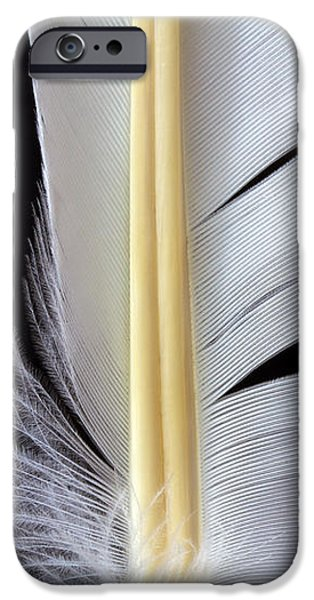 White Feather iPhone Case by Bob Orsillo