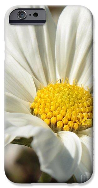 White Flower iPhone Case by Carol Groenen