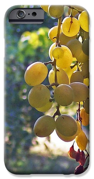 White Grapes iPhone Case by Barbara McMahon
