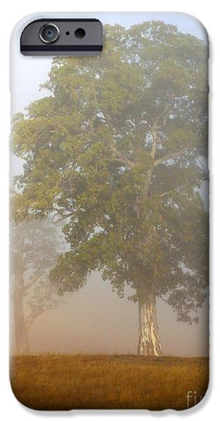 Fog Mist iPhone Cases - White Gum Dawn iPhone Case by Mike  Dawson