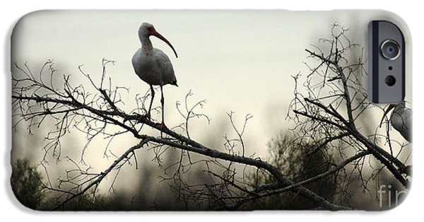 Ibis iPhone Cases - White Ibis Pair iPhone Case by Bob Christopher
