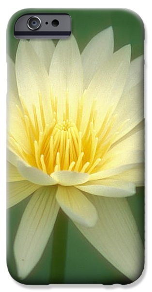White Lily iPhone Case by Ron Dahlquist - Printscapes