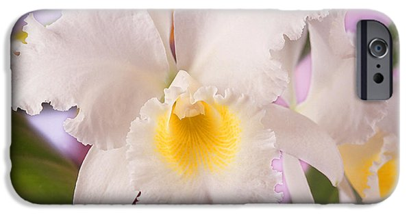 White Orchid iPhone Cases - White Orchid iPhone Case by Mike McGlothlen