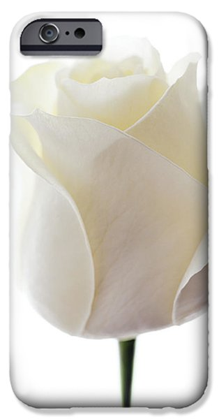 First Love iPhone Cases - White Rose (rosa Sp.) iPhone Case by Gavin Kingcome