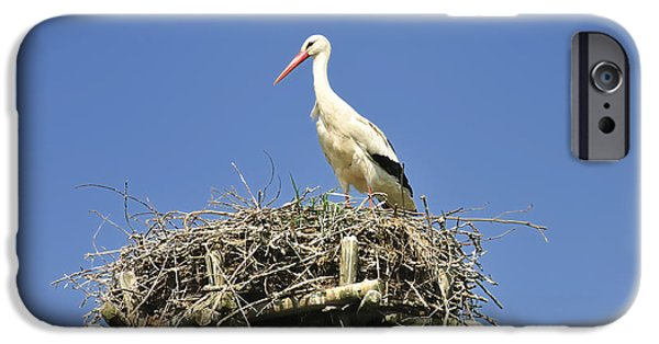 The Hatchery iPhone Cases - White stork Ciconia ciconia iPhone Case by Matthias Hauser