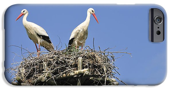 The Hatchery iPhone Cases - White storks in their nest iPhone Case by Matthias Hauser