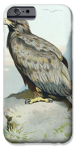 Drawing Of Eagle iPhone Cases - White-tailed Eagle, Historical Artwork iPhone Case by Sheila Terry
