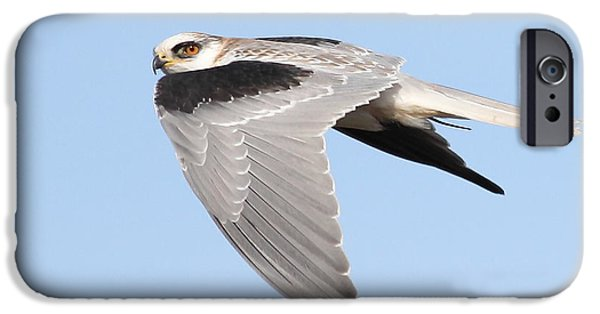 Hawk iPhone Cases - White-Tailed Kite Hawk In Flight . 7D11110 iPhone Case by Wingsdomain Art and Photography