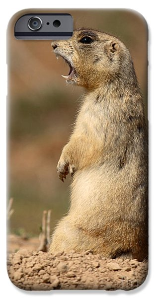Prairie Dogs iPhone Cases - White-tailed Prairie Dog Giving A Fierce Bark iPhone Case by Max Allen