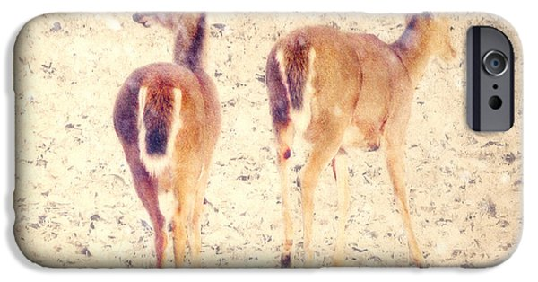 Snow iPhone Cases - White Tails in the Snow iPhone Case by Amy Tyler