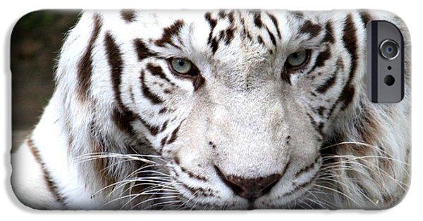 White Tiger iPhone Cases - White Tiger iPhone Case by Nancy  Coelho