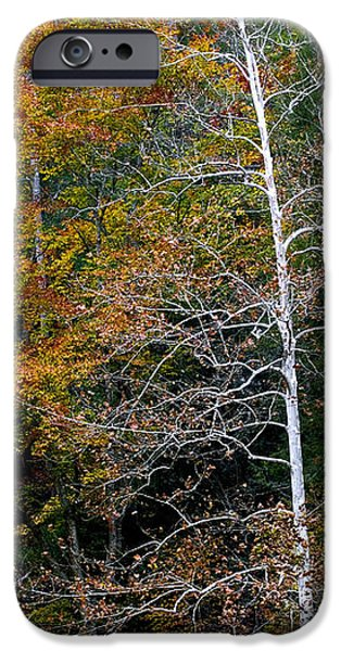 White Tree Fall Colors  iPhone Case by Rich Franco