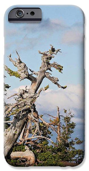 Whitebark Pine at Crater Lake's rim - Oregon iPhone Case by Christine Till