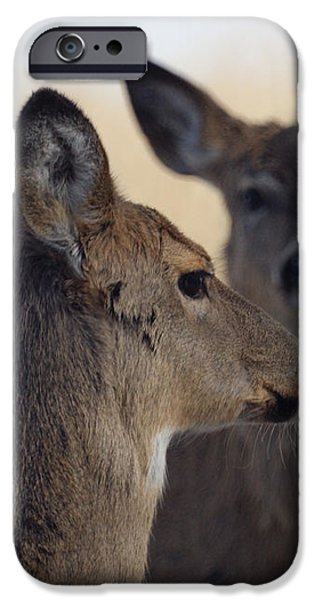 Whitetail Deer iPhone Case by Ernie Echols