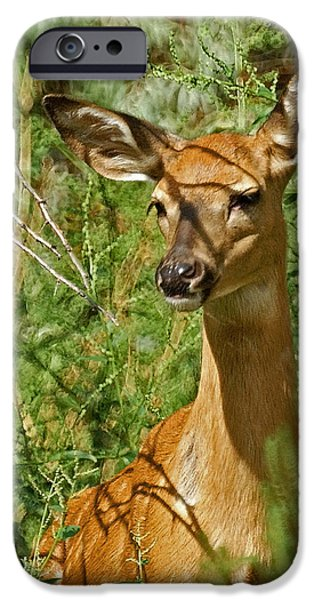 Whitetail Doe Painterly iPhone Case by Ernie Echols