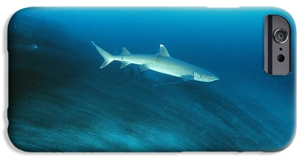 Shark iPhone Cases - Whitetip Reef Shark iPhone Case by Matthew Oldfield