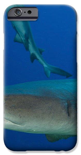Whitetip Reef Shark, Papua New Guinea iPhone Case by Steve Jones