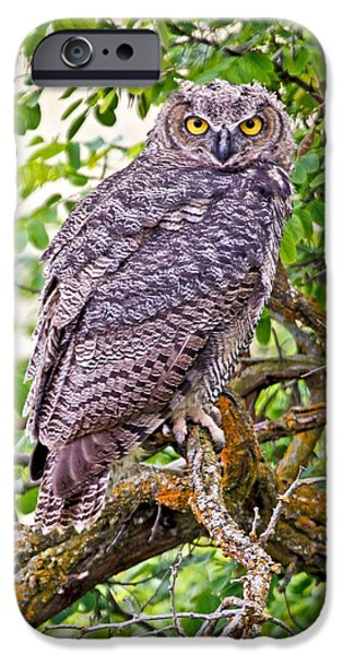 Who Gives A Hoot iPhone Case by Athena Mckinzie