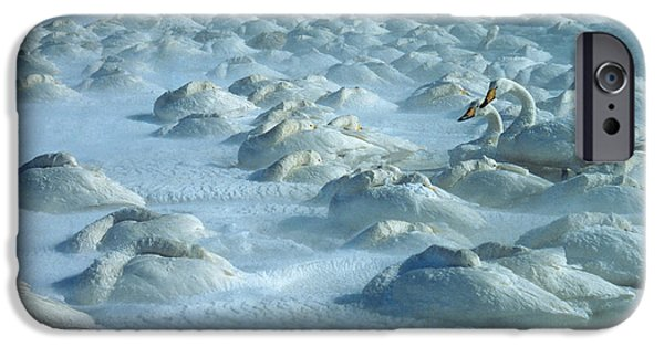 Fauna iPhone Cases - Whooper Swans in Snow iPhone Case by Teiji Saga and Photo Researchers