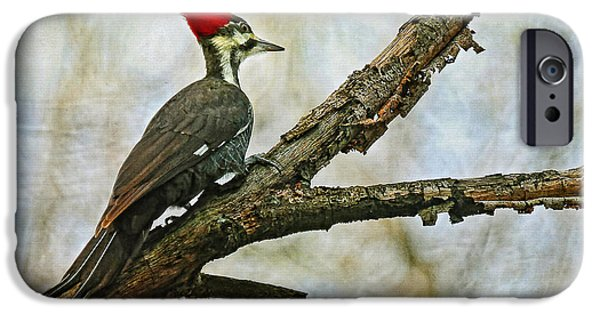 Woodpecker iPhone Cases - Whos There iPhone Case by Lois Bryan