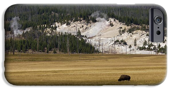 Yellowstone National Park iPhone Cases - Wild Buffalo Yellowstone National Park iPhone Case by Dustin K Ryan