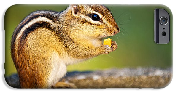 Friendly iPhone Cases - Wild chipmunk  iPhone Case by Elena Elisseeva