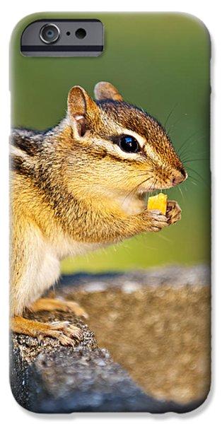 Wild chipmunk  iPhone Case by Elena Elisseeva