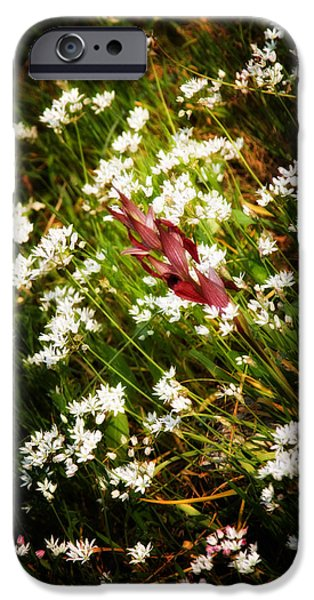 Park Scene iPhone Cases - Wild Flowers iPhone Case by Stylianos Kleanthous