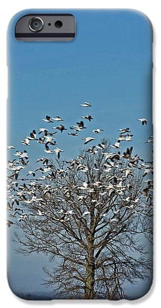 Wild Geese III iPhone Case by Debbie Portwood