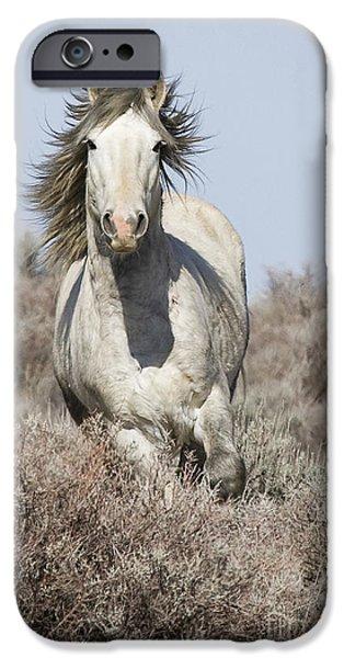 Wild Grey Stallion Runs Close iPhone Case by Carol Walker