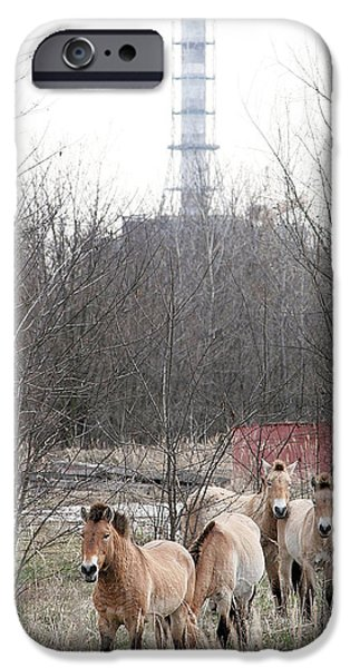 Wildlife Disasters iPhone Cases - Wild Horses Near Chernobyl iPhone Case by Ria Novosti