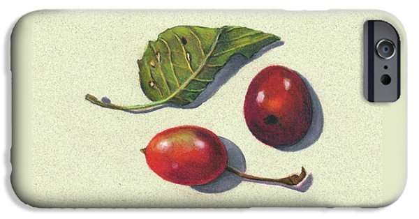 Plum Drawings iPhone Cases - Wild Plums and Leaf iPhone Case by Joyce Geleynse