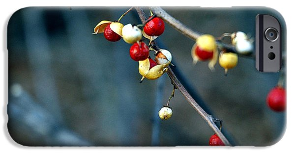 Nature Center Pond iPhone Cases - Wild Red Berries out of the shell iPhone Case by LeeAnn McLaneGoetz McLaneGoetzStudioLLCcom