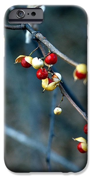 Wild Red Berries out of the shell iPhone Case by LeeAnn McLaneGoetz McLaneGoetzStudioLLCcom