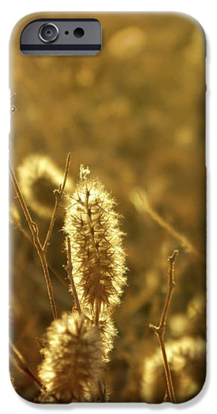 Wild Spikes iPhone Case by Carlos Caetano