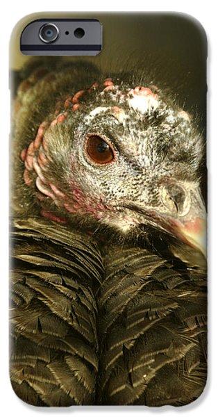 Meleagris Gallopavo iPhone Cases - Wild Turkey Meleagris Gallopavo iPhone Case by Steeve Marcoux