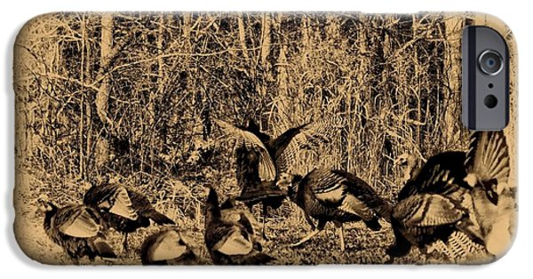 Wild Turkey iPhone Cases - Wild Turkeys iPhone Case by Bill Cannon