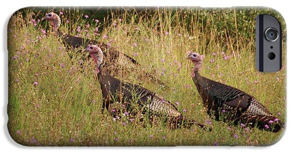 Wild Turkey iPhone Cases - Wild Turkeys iPhone Case by Michael Peychich