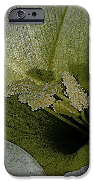 Wildflower Window iPhone Case by Chris Berry