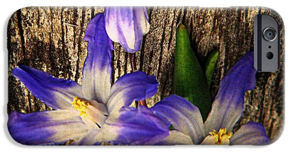 Spit iPhone Cases - Wildflowers on Wood iPhone Case by Chris Berry