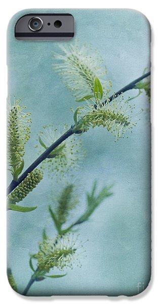 willow catkins iPhone Case by Priska Wettstein