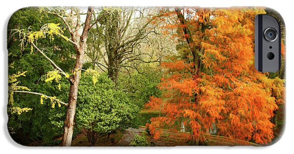Vale iPhone Cases - Willow in Autumn colors iPhone Case by Gaspar Avila