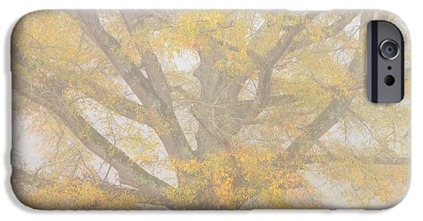 Willow Lake iPhone Cases - Willow Oak in Fog iPhone Case by Bill Swindaman