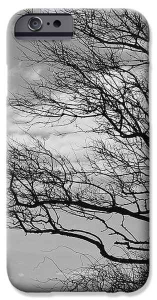 Wind Blown iPhone Case by Catherine Reusch  Daley
